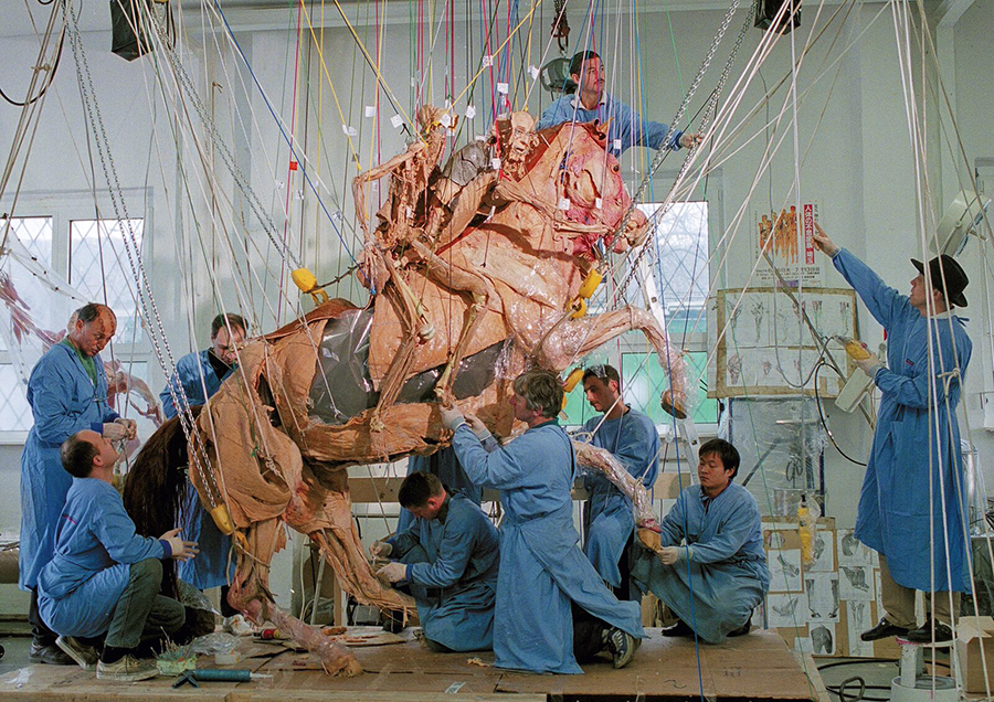 "Positioning of The Rearing Horse with Rider. Gunther von Hagens and his team positioning the mega plastinate ""The Rearing Horse with Rider"". Completion of this plastinate took 3 years. Copyright: Gunther von Hagens' BODY WORLDS, Institute for Plastination, Heidelberg, Germany, www.bodyworlds.com"