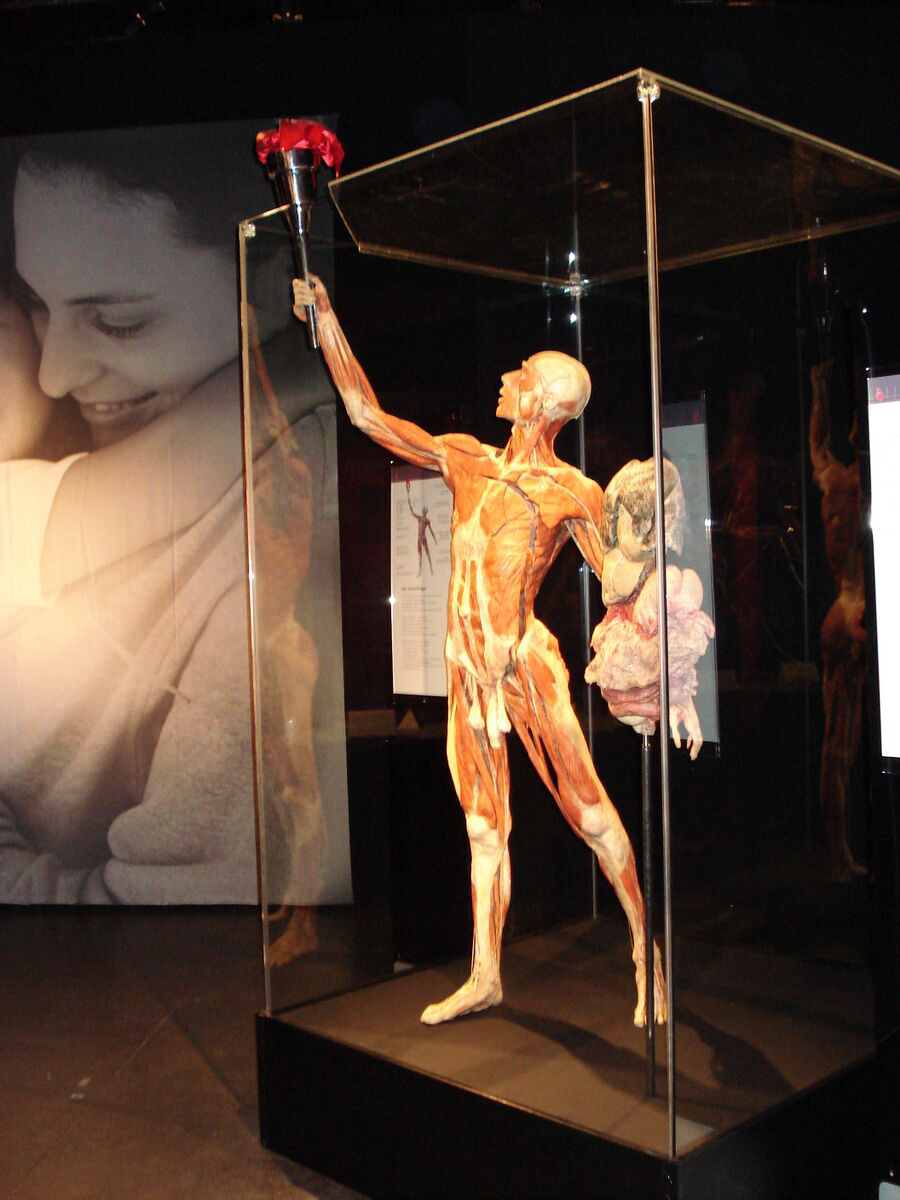Exhibition impression with the plastinate The Torchbearer. Copyright: Gunther von Hagens' BODY WORLDS, Institute for Plastination, Heidelberg, Germany, www.bodyworlds.com